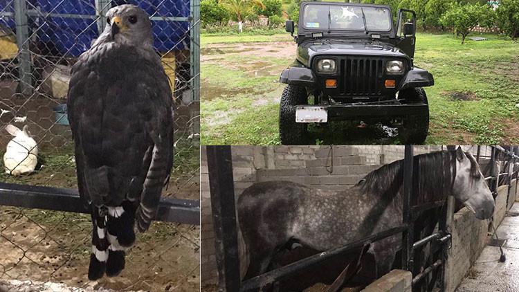 Formal Prision Zoológico Con Gato Montés Y Correcaminos En Un